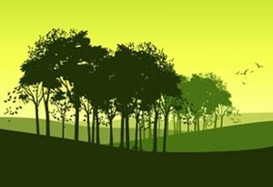 Projeto para sequestro de carbono